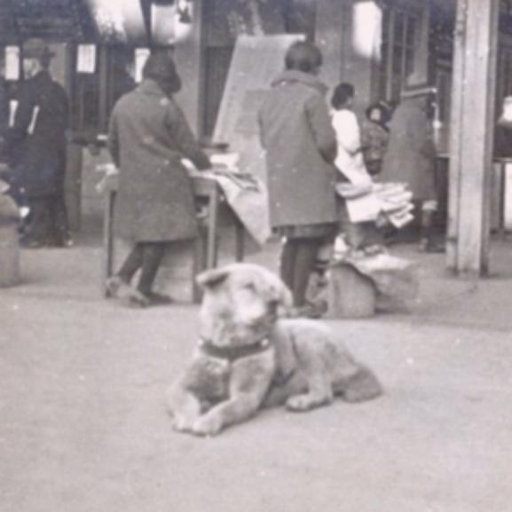 Megható történet – Megtaláltuk a világ leghűségesebb kutyáját!