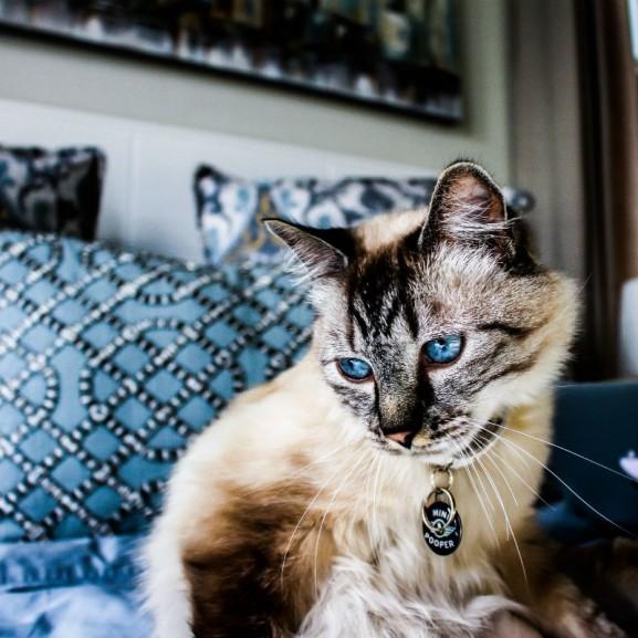 lakás macska