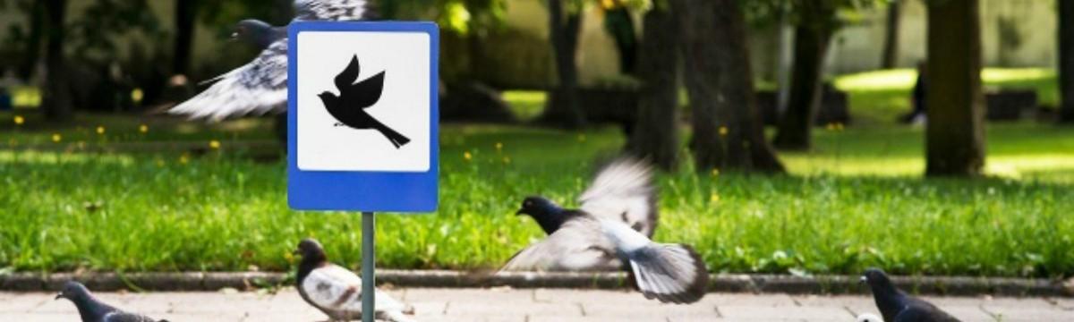 leszállópálya madarak