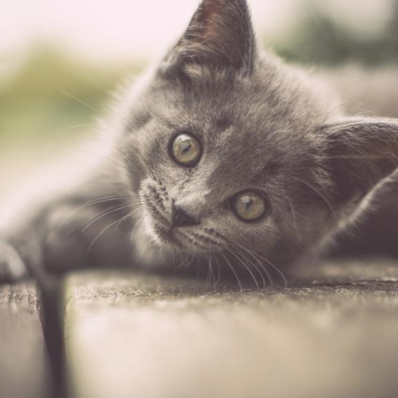 Egyértelmű bizonyítékok arra, hogy egy macska jobb lakótárs a férfiaknál
