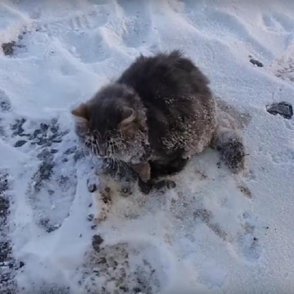macska hó tél