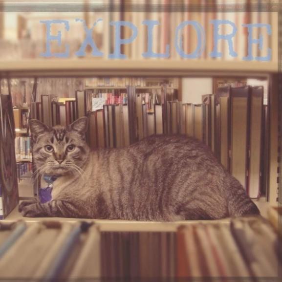 macska könyvtár