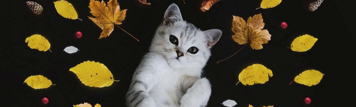 macska ősz