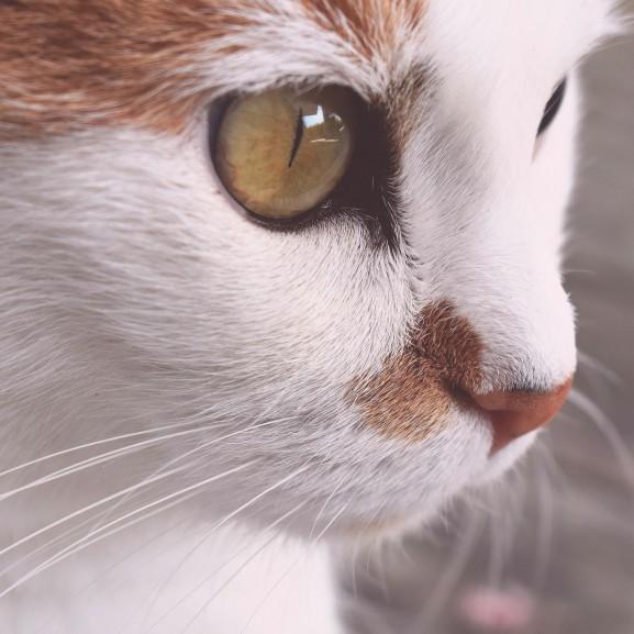 macska01