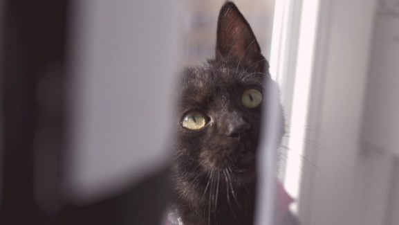 macskával az élet nem mindig habostorta