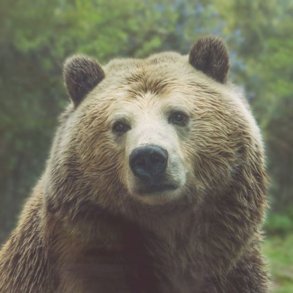 medve-maci-macko-allat