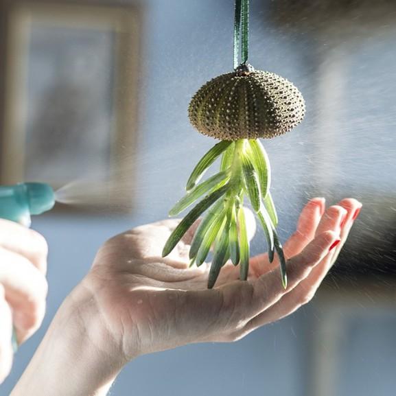 Mojzes Nóra Használjátok fel a nyaralások alatt összegyűjtögetett kagylókat és csigákat és készítsetek belőlük mini függőkertet a lakásban