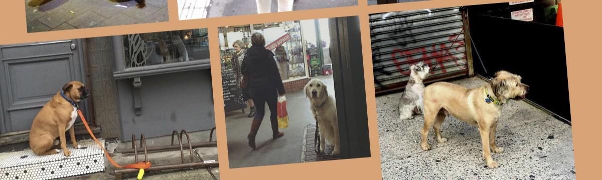 Molnár Viola Anna bolt előtt várakozó kutya gyűjtemény szőrös szerda
