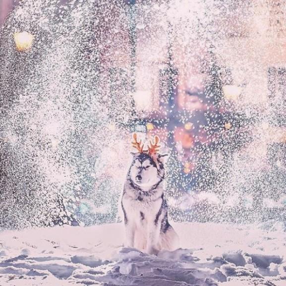 moszkva-oroszorszag-havazas-ho-tel-kutya