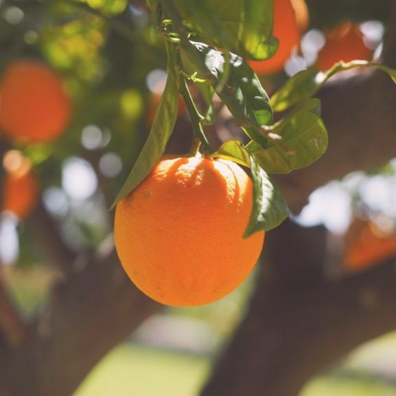 narancs gyümölcs nyár