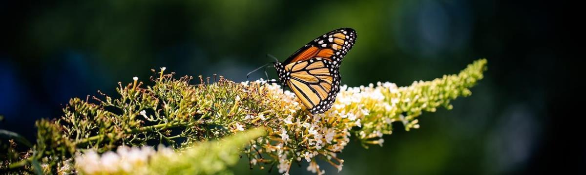Így csalogassátok be a pillangókat a kertetekbe!