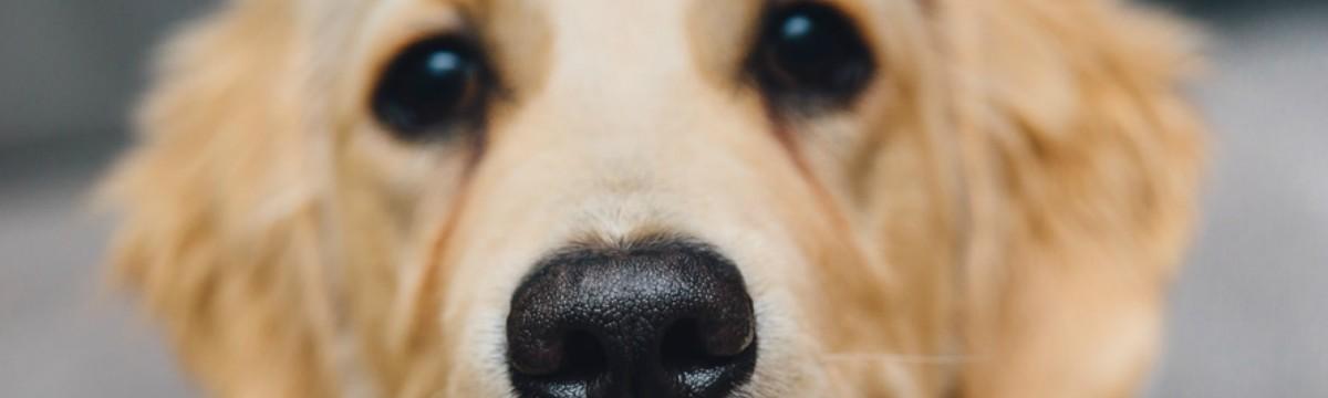 night-animal-dog-pet-large
