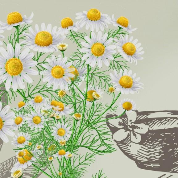 Nyolc nyomós érvünk van rá, hogy mindig legyen nálatok otthon egy zacskó kamilla virágzat Molnár Viola Anna