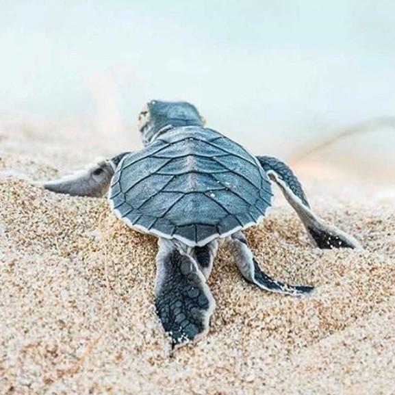 Óceánok védelme márkák
