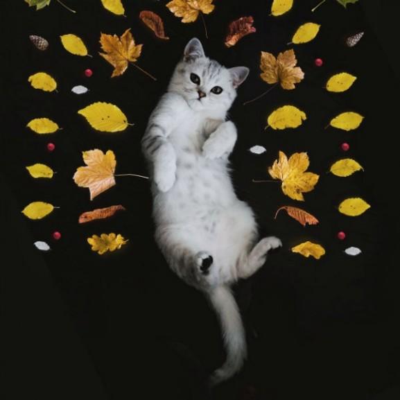 őszi dekoráció macska