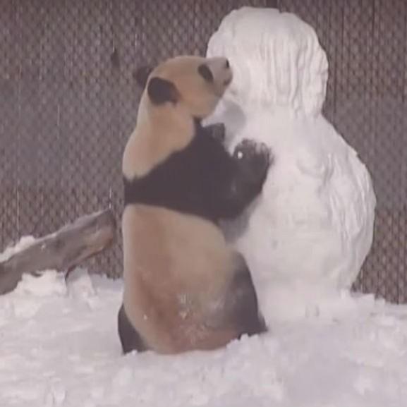 panda-maci-medve-hoember-ho