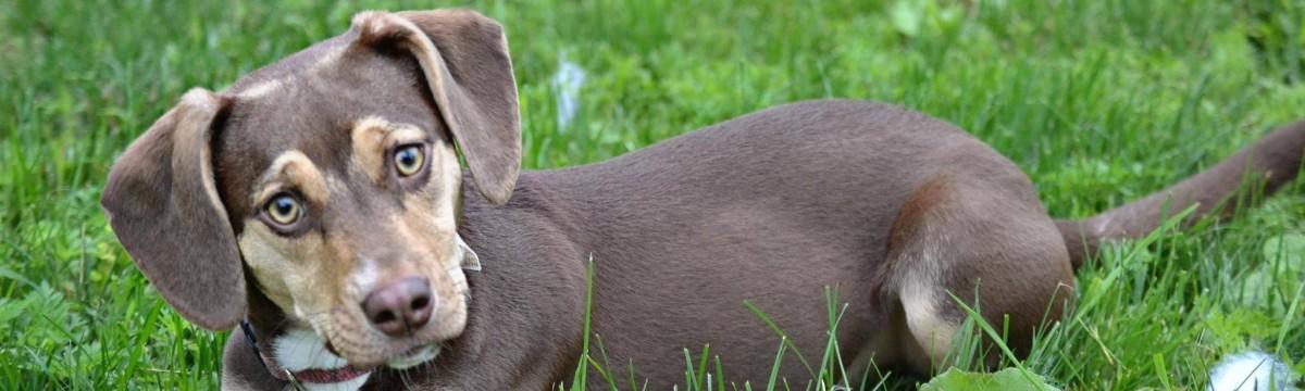 peanut-allatmenhelyi-kutya