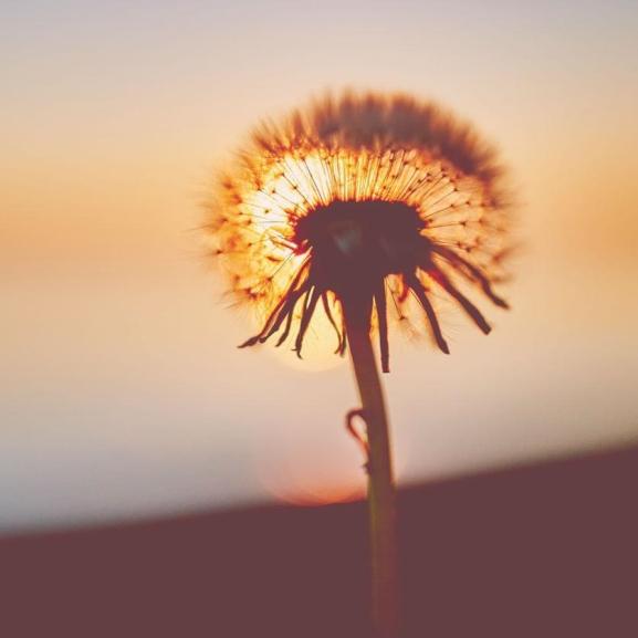 Amilyen a kedvenc virágotok, olyan a személyiségetek is