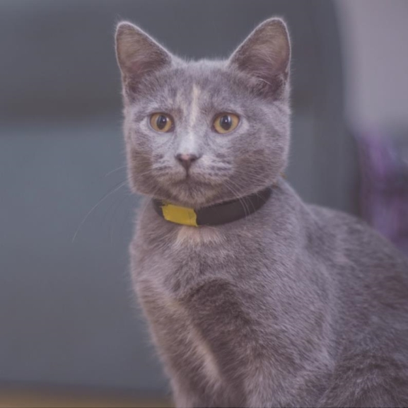 Agyzsibbasztó találmány: elkészült a cicanyalogató, macskásoknak