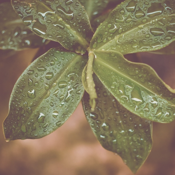 Elegetek van a pasikból? Ezeket a növényeket nektek találták ki!