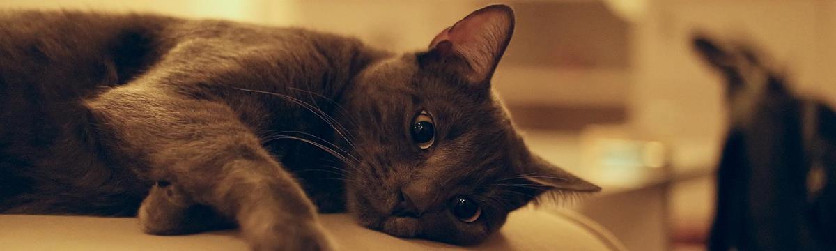 Őrült játék uralja a világot – hódít a macskainvázió app!