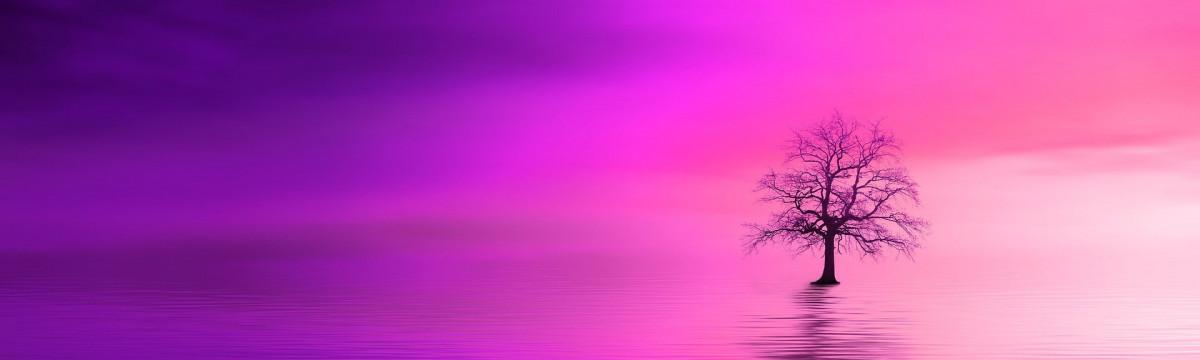 pink-dawn-3870437_1920