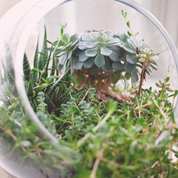 Terráriumot minden lakásba! Kígyó helyett növényekkel