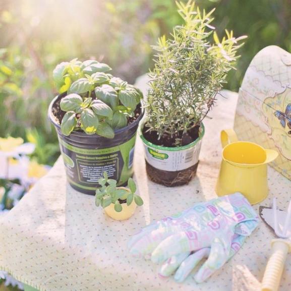 Ezért zöldelljen a lakásotokban friss, üde fűszernövény
