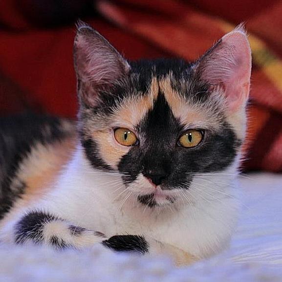 POPPY naplója – Nektek is ilyen az életetek, ha van macskátok