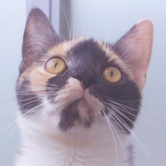 POPPY naplója – Mit csinál a cicám, amíg nem vagyok otthon?