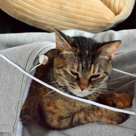 Pulcsi macska zsebbel