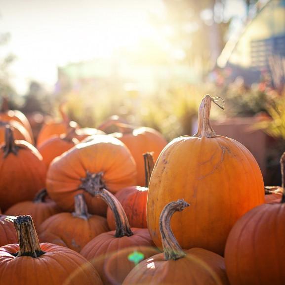 pumpkins-2871265_1920