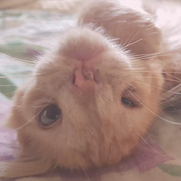 romeo cica macska