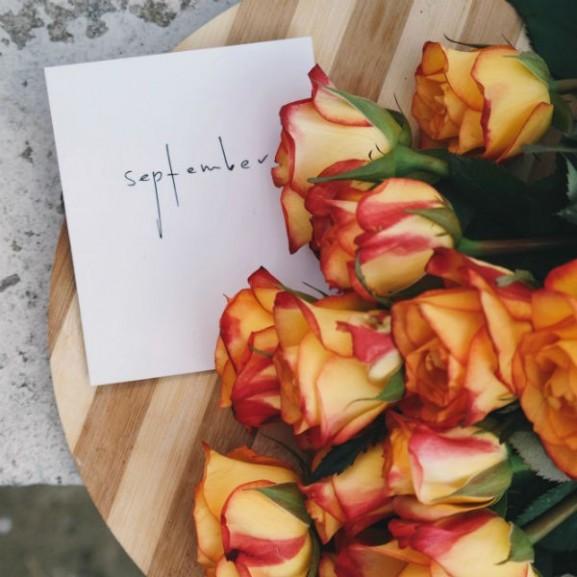 rózsa szeptember virág