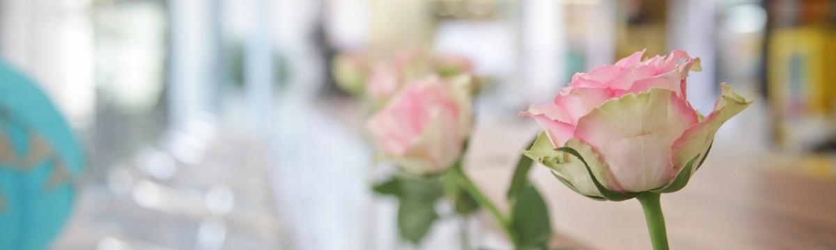 rózsa virág