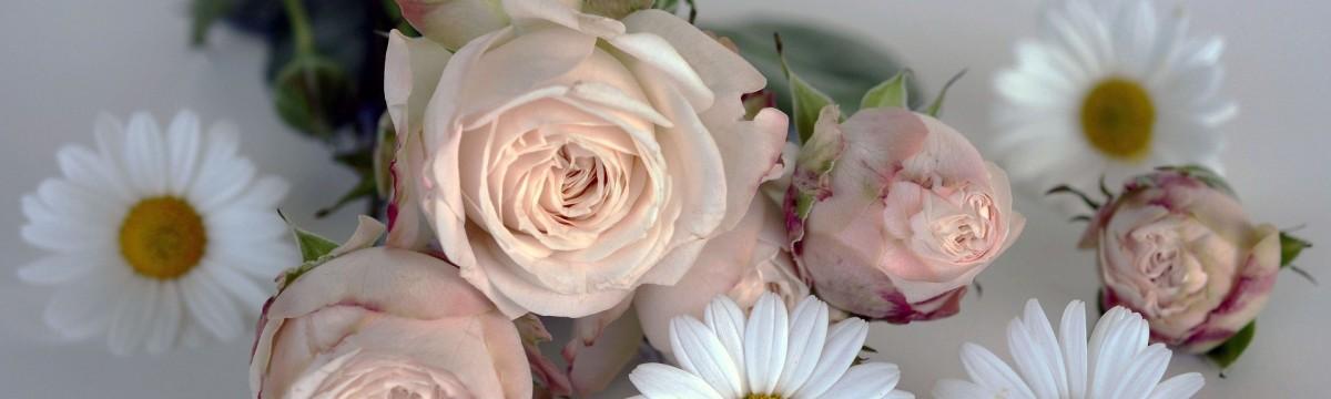 rózsa virágok