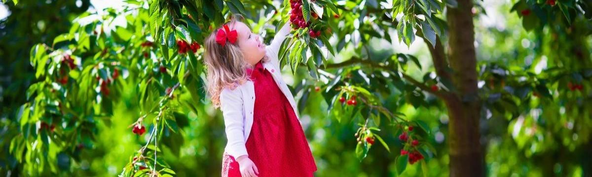 Szedd magad gyümölcs lista praktikus tipp