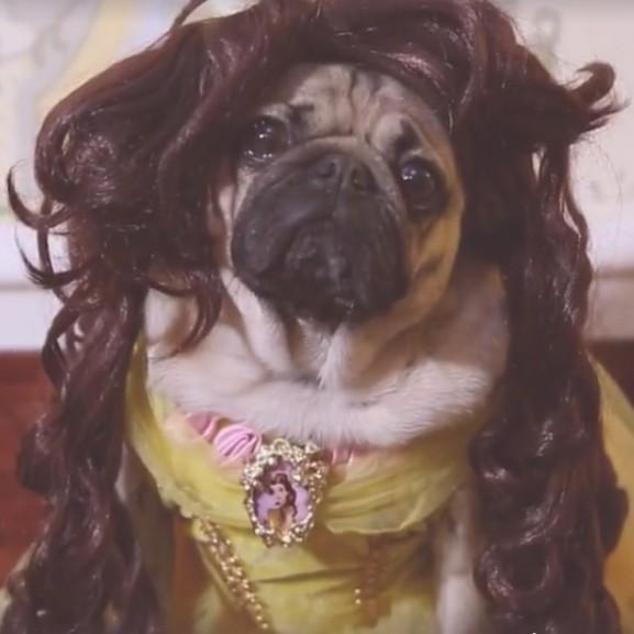szepseg-es-a-szornyeteg-beauty-and-the-beast-kutya-mopsz