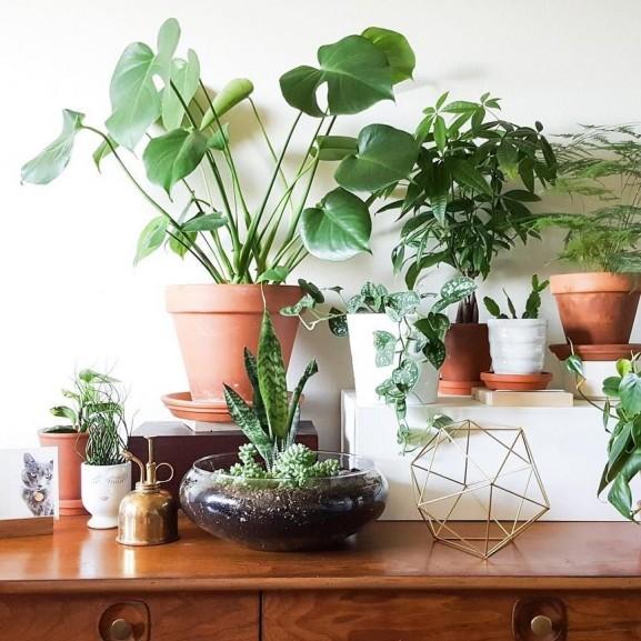 szobanövények mojzes nóra