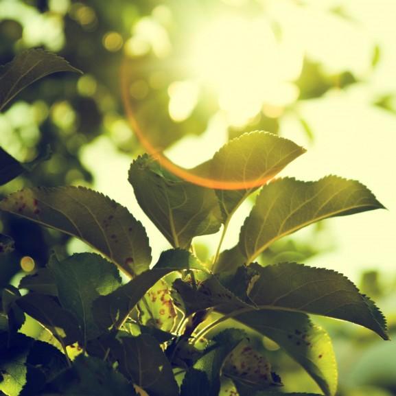 tavasz fa