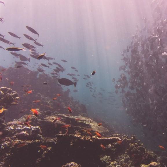 tenger-ocean-viz-halak