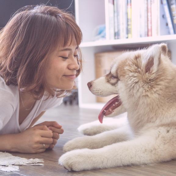 Ezért boldogak annyira a kutyák, mikor hazaérkeztek