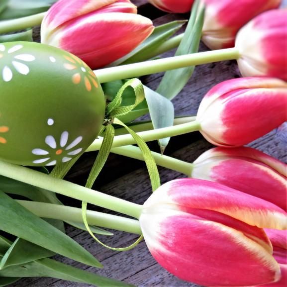 tulips-4103299_1920