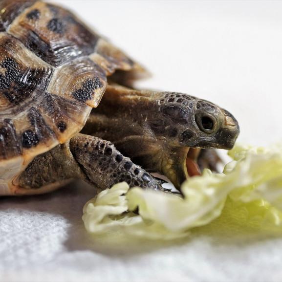 turtle-4011607_1920