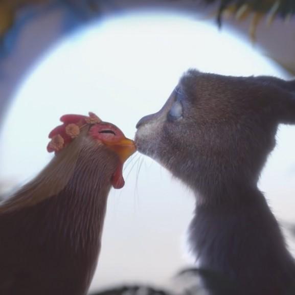 tyúk csirke