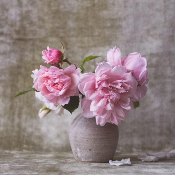 virág, bazsarózsa