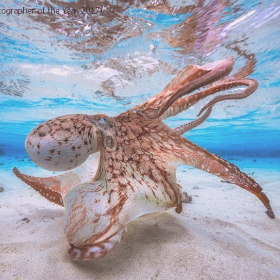 viz-alatti-foto-tenger