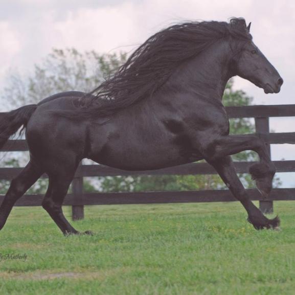 Ismerjétek meg a legjóképűbb lovat hetedhét országon