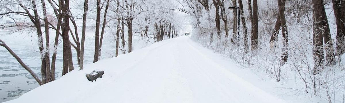 Különleges fotók a havazásról: tündéri üzenetek és cicalábnyomok