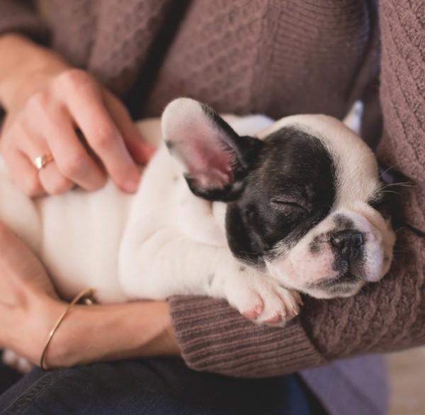 francia bulldog kutya gazdi